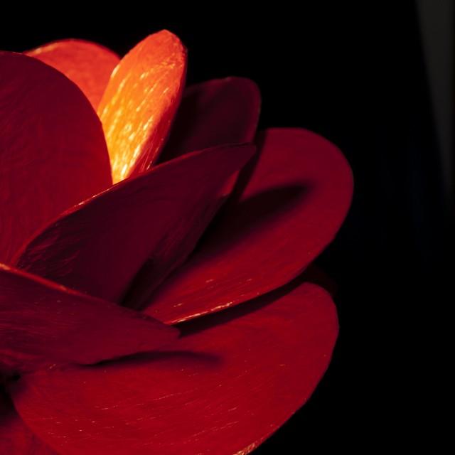 D rosa roja